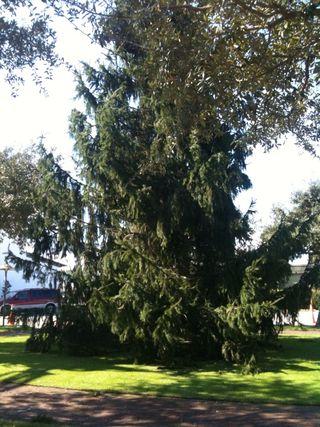 Treee5